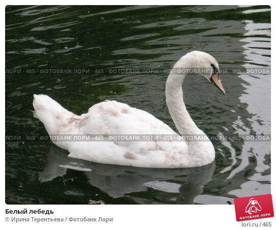 Белый лебедь, эксклюзивное фото № 465, снято 15 июля 2004 г. (c) Ирина Терентьева / Фотобанк Лори