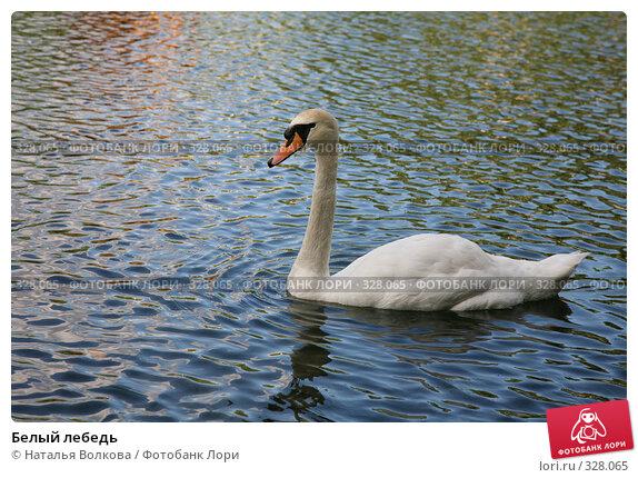 Купить «Белый лебедь», эксклюзивное фото № 328065, снято 18 июня 2008 г. (c) Наталья Волкова / Фотобанк Лори