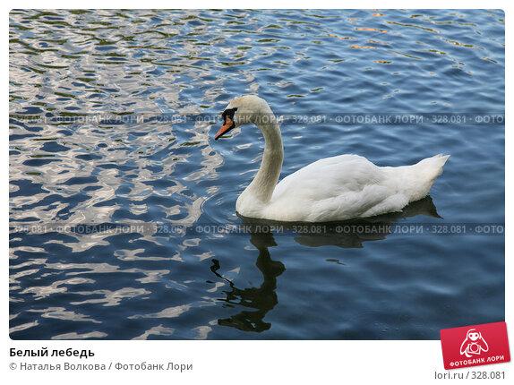 Белый лебедь, эксклюзивное фото № 328081, снято 18 июня 2008 г. (c) Наталья Волкова / Фотобанк Лори