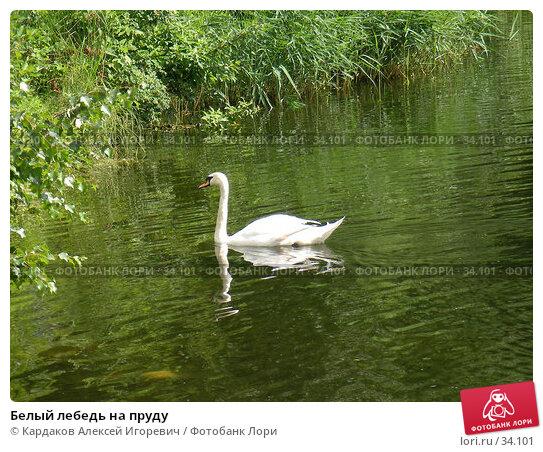 Белый лебедь на пруду, фото № 34101, снято 2 июля 2006 г. (c) Кардаков Алексей Игоревич / Фотобанк Лори