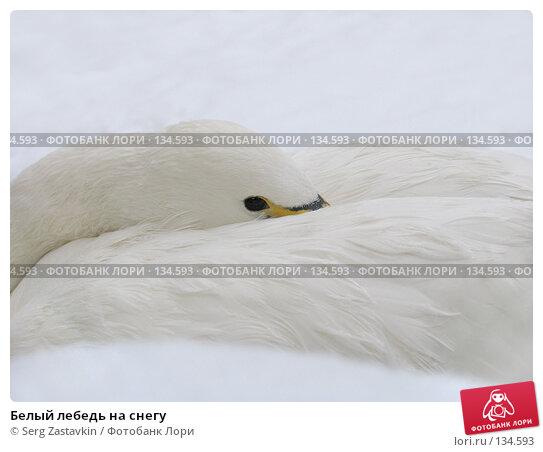 Белый лебедь на снегу, фото № 134593, снято 7 ноября 2004 г. (c) Serg Zastavkin / Фотобанк Лори