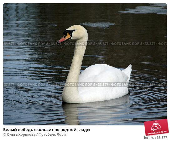 Белый лебедь скользит по водной глади, фото № 33877, снято 15 апреля 2007 г. (c) Ольга Хорькова / Фотобанк Лори