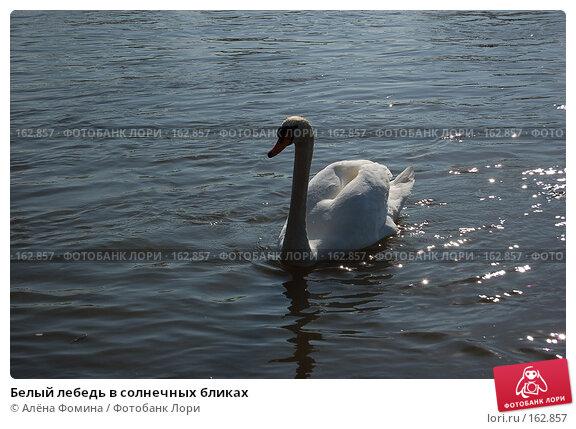 Белый лебедь в солнечных бликах, фото № 162857, снято 28 марта 2007 г. (c) Алёна Фомина / Фотобанк Лори