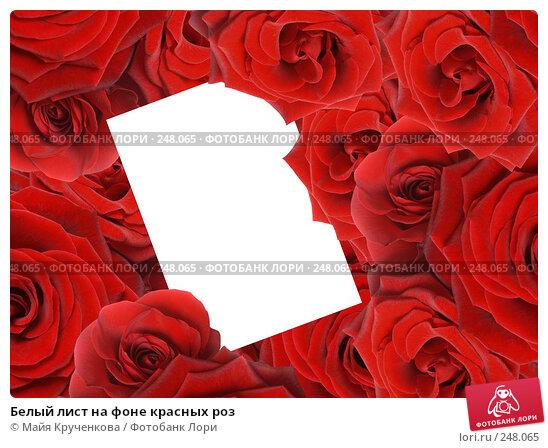 Белый лист на фоне красных роз, фото № 248065, снято 5 января 2008 г. (c) Майя Крученкова / Фотобанк Лори
