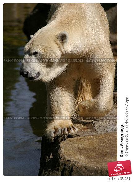 Белый медведь, фото № 35081, снято 21 апреля 2007 г. (c) Блинова Ольга / Фотобанк Лори