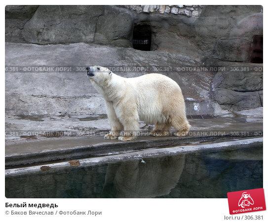 Белый медведь, фото № 306381, снято 16 апреля 2008 г. (c) Бяков Вячеслав / Фотобанк Лори