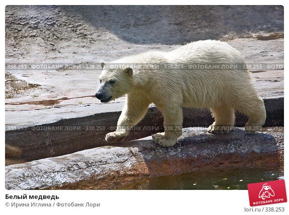 Белый медведь, фото № 338253, снято 21 июня 2008 г. (c) Ирина Иглина / Фотобанк Лори