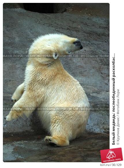 Купить «Белый медведь: послеобеденный расколбас...», фото № 30129, снято 4 марта 2007 г. (c) Крупнов Денис / Фотобанк Лори