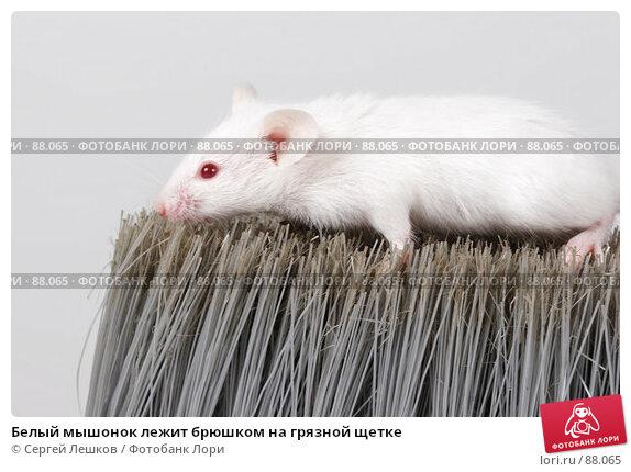 Белый мышонок лежит брюшком на грязной щетке, фото № 88065, снято 23 сентября 2007 г. (c) Сергей Лешков / Фотобанк Лори