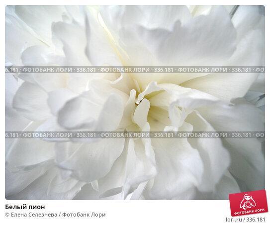 Белый пион, фото № 336181, снято 24 июня 2008 г. (c) Елена Селезнева / Фотобанк Лори