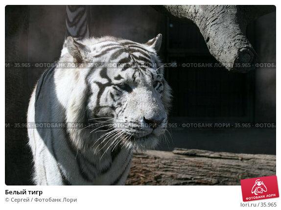 Белый тигр, фото № 35965, снято 10 апреля 2007 г. (c) Сергей / Фотобанк Лори