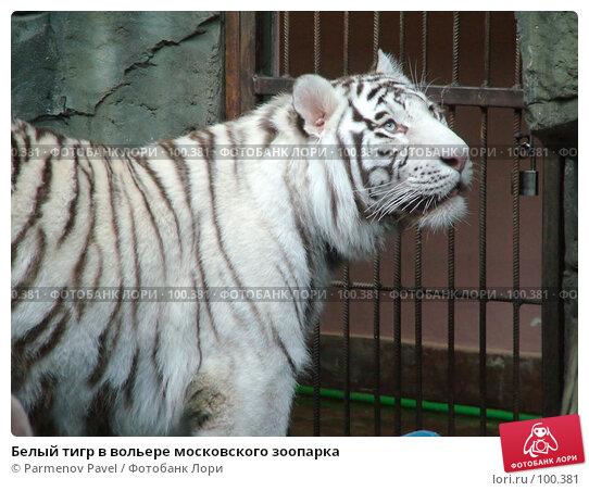 Белый тигр в вольере московского зоопарка, фото № 100381, снято 9 марта 2007 г. (c) Parmenov Pavel / Фотобанк Лори
