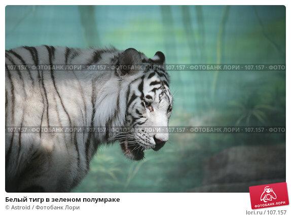 Белый тигр в зеленом полумраке, фото № 107157, снято 16 марта 2007 г. (c) Astroid / Фотобанк Лори