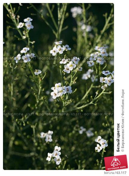 Белый цветок, фото № 63117, снято 22 июня 2007 г. (c) Биржанова Юлия / Фотобанк Лори