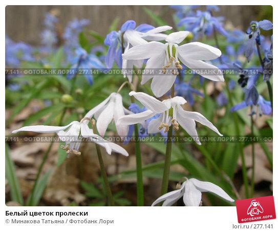 Белый цветок пролески, фото № 277141, снято 6 апреля 2008 г. (c) Минакова Татьяна / Фотобанк Лори