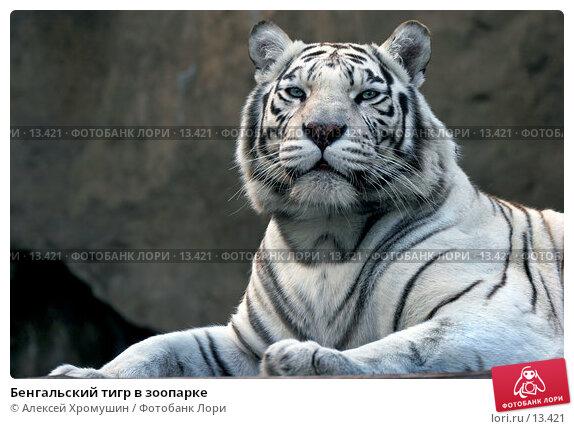Бенгальский тигр в зоопарке, фото № 13421, снято 28 сентября 2006 г. (c) Алексей Хромушин / Фотобанк Лори