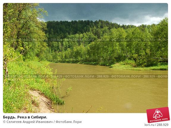 Бердь. Река в Сибири., фото № 288929, снято 11 июня 2007 г. (c) Селигеев Андрей Иванович / Фотобанк Лори