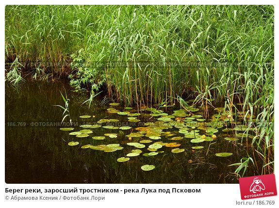 Берег реки, заросший тростником - река Лука под Псковом, фото № 186769, снято 6 июля 2007 г. (c) Абрамова Ксения / Фотобанк Лори