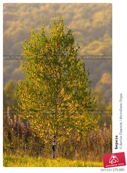 Береза, фото № 275885, снято 25 сентября 2007 г. (c) Антон Павлов / Фотобанк Лори