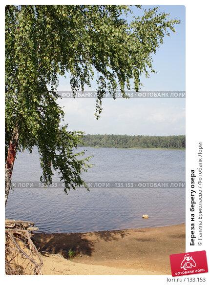 Купить «Береза на берегу озера», фото № 133153, снято 25 августа 2007 г. (c) Галина Ермолаева / Фотобанк Лори