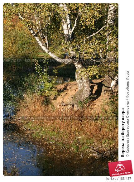 Береза на берегу озера, фото № 183457, снято 26 сентября 2007 г. (c) Карасева Екатерина Олеговна / Фотобанк Лори