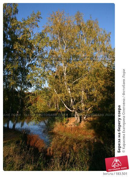 Береза на берегу озера, фото № 183501, снято 26 сентября 2007 г. (c) Карасева Екатерина Олеговна / Фотобанк Лори