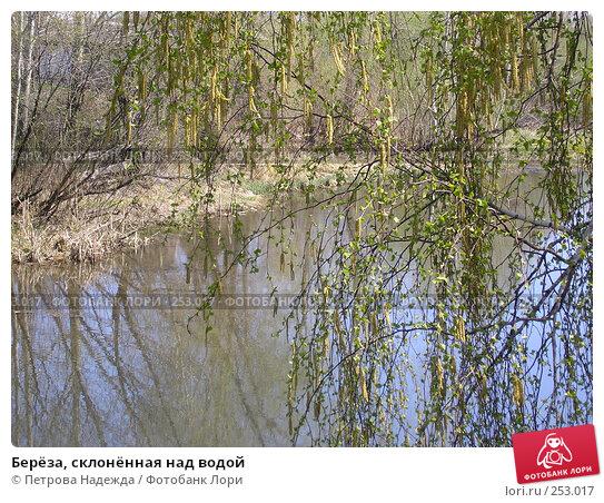 Берёза, склонённая над водой, фото № 253017, снято 15 мая 2006 г. (c) Петрова Надежда / Фотобанк Лори