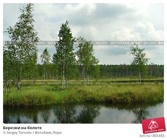 Березки на болоте, фото № 303653, снято 28 июля 2004 г. (c) Sergey Toronto / Фотобанк Лори