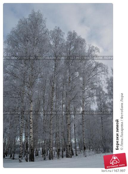 Березки зимой, фото № 167997, снято 2 января 2008 г. (c) Лена Лазарева / Фотобанк Лори