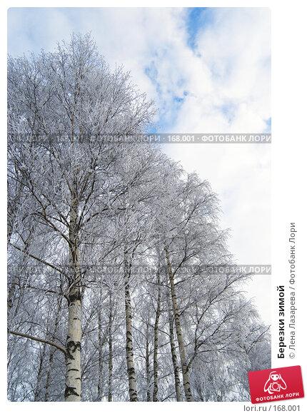 Березки зимой, фото № 168001, снято 2 января 2008 г. (c) Лена Лазарева / Фотобанк Лори