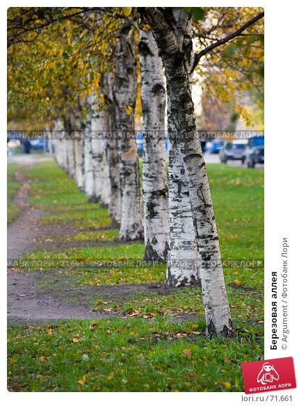 Березовая аллея, фото № 71661, снято 26 октября 2006 г. (c) Argument / Фотобанк Лори