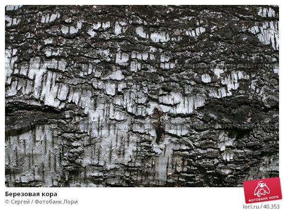 Купить «Березовая кора», фото № 40353, снято 6 мая 2007 г. (c) Сергей / Фотобанк Лори