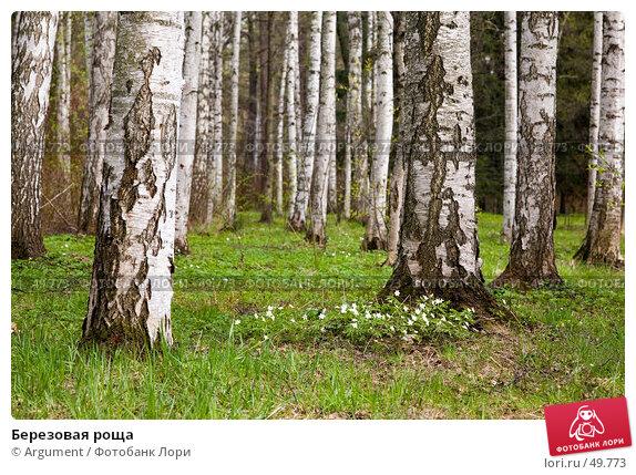 Купить «Березовая роща», фото № 49773, снято 7 мая 2007 г. (c) Argument / Фотобанк Лори