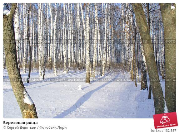 Березовая роща, фото № 132557, снято 25 ноября 2007 г. (c) Сергей Девяткин / Фотобанк Лори