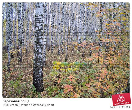 Березовая роща, фото № 172285, снято 15 октября 2007 г. (c) Вячеслав Потапов / Фотобанк Лори