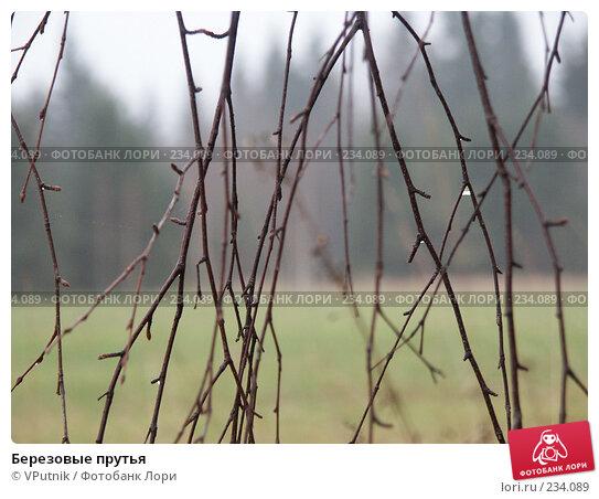Березовые прутья, фото № 234089, снято 5 ноября 2004 г. (c) VPutnik / Фотобанк Лори