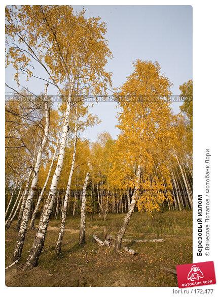 Березовый излом, фото № 172477, снято 19 октября 2007 г. (c) Вячеслав Потапов / Фотобанк Лори