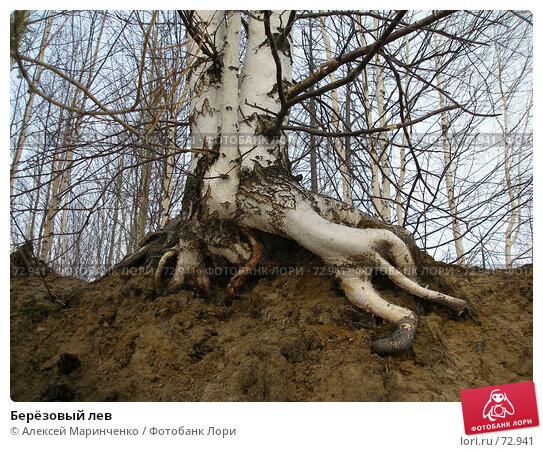 Берёзовый лев, фото № 72941, снято 14 апреля 2007 г. (c) Алексей Маринченко / Фотобанк Лори