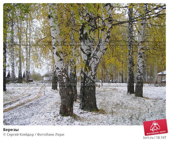Березы, фото № 18197, снято 15 октября 2006 г. (c) Сергей Ксейдор / Фотобанк Лори