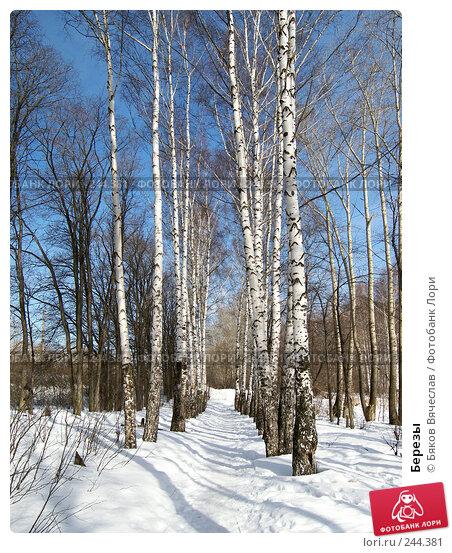 Березы, фото № 244381, снято 22 марта 2008 г. (c) Бяков Вячеслав / Фотобанк Лори