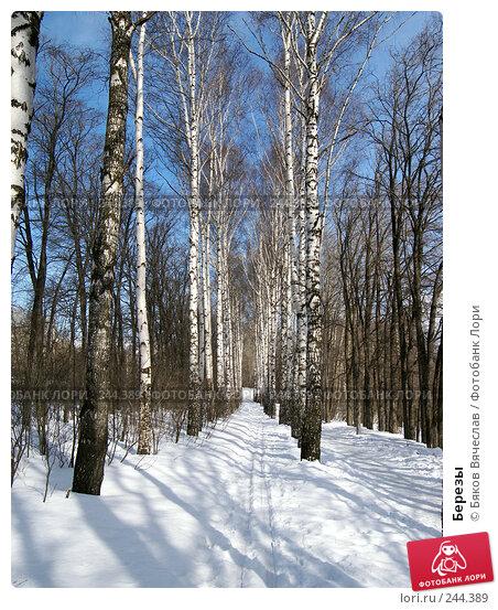 Березы, фото № 244389, снято 22 марта 2008 г. (c) Бяков Вячеслав / Фотобанк Лори