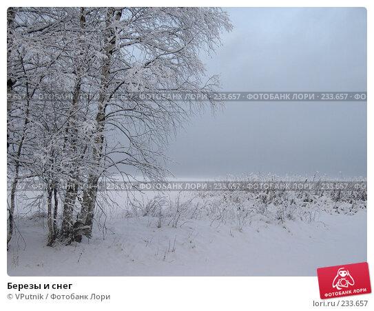 Березы и снег, фото № 233657, снято 27 февраля 2017 г. (c) VPutnik / Фотобанк Лори