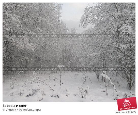Березы и снег, фото № 233665, снято 24 февраля 2017 г. (c) VPutnik / Фотобанк Лори