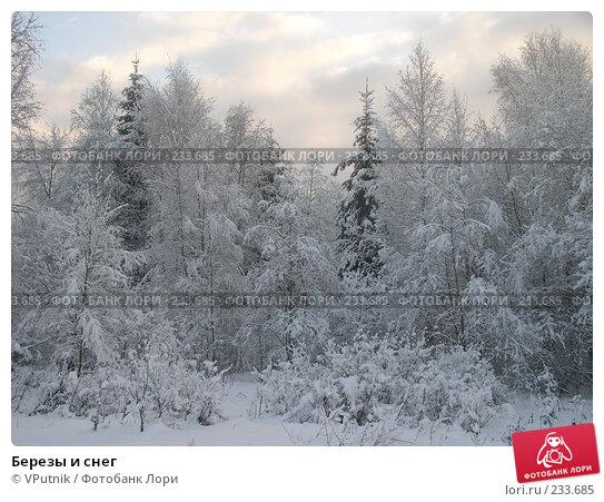Березы и снег, фото № 233685, снято 28 февраля 2017 г. (c) VPutnik / Фотобанк Лори