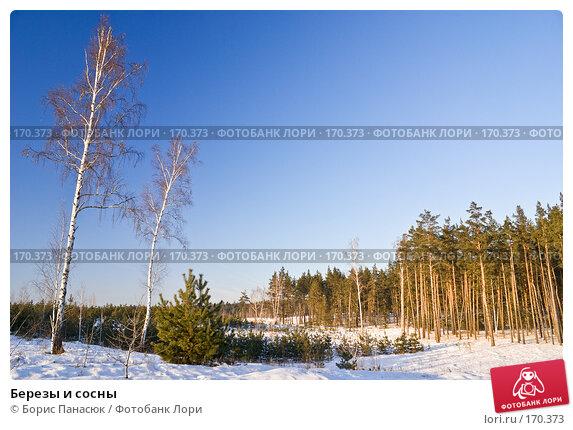 Березы и сосны, фото № 170373, снято 31 декабря 2007 г. (c) Борис Панасюк / Фотобанк Лори