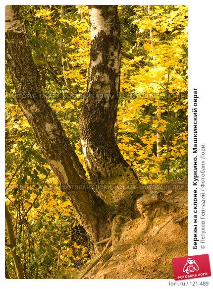 Купить «Березы на склоне. Куркино. Машкинский овраг», фото № 121489, снято 22 сентября 2007 г. (c) Петухов Геннадий / Фотобанк Лори