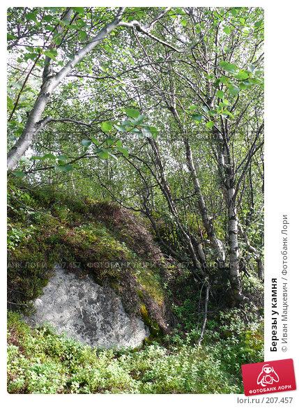Березы у камня, фото № 207457, снято 9 августа 2007 г. (c) Иван Мацкевич / Фотобанк Лори