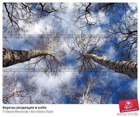 Березы уходящие в небо, фото № 117733, снято 8 апреля 2007 г. (c) Бяков Вячеслав / Фотобанк Лори
