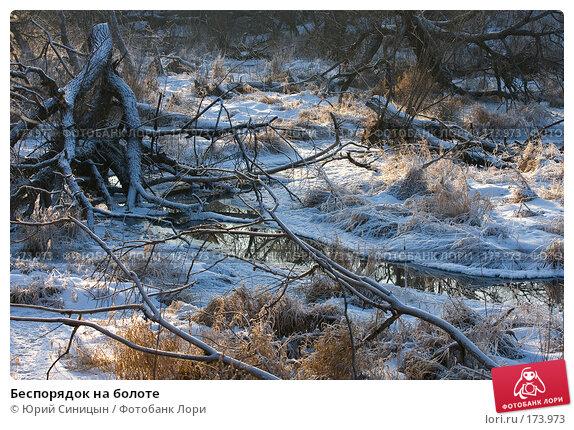 Беспорядок на болоте, фото № 173973, снято 8 января 2008 г. (c) Юрий Синицын / Фотобанк Лори