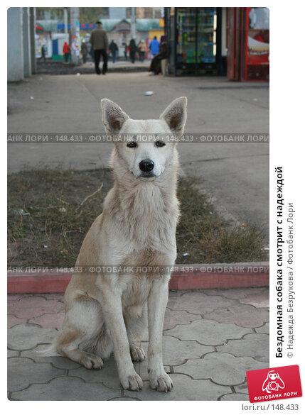 Бездомная собака смотрит с надеждой, фото № 148433, снято 1 ноября 2007 г. (c) Надежда Безрукова / Фотобанк Лори